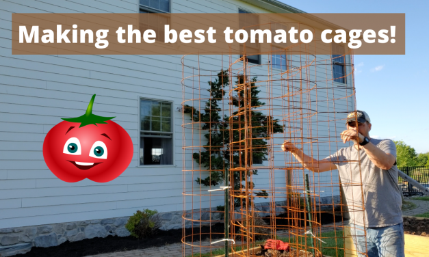 Making the best tomato cages